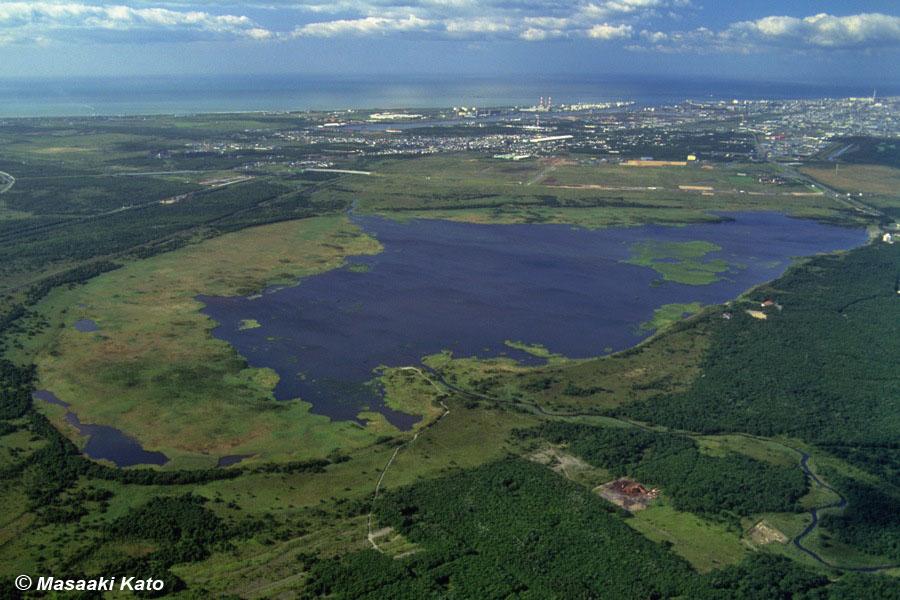 1993年8月16日撮影 ウトナイ湖 撮影:加藤雅昭