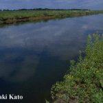 「千歳川放水路-最近の動き」-大西陽一