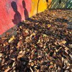 落葉と怪獣たち
