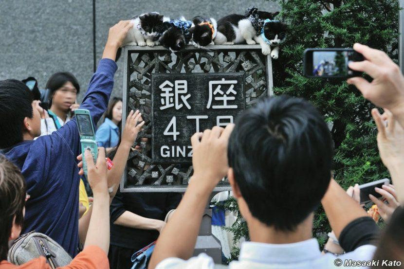 撮影:2013年9月23日 銀座4丁目標識上に放置された仔猫