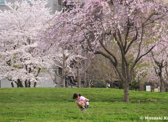 この公園の土壌からも高濃度のダイオキシンが検出された