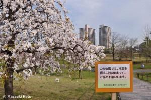 「この公園では、地面を掘ることは禁止です。」と書かれた立て看板
