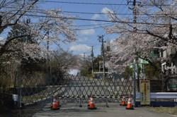 国道6号線の両脇は帰還困難区域ばかり 4月13日 富岡町