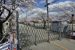 大部分が帰還困難区域のままの富岡町夜ノ森地区の桜 4月13日