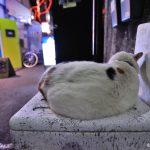 ゴールデン街の猫