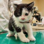 保護仔猫の血液検査で…