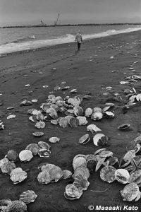 撮影:1977年3月8日 ホタテの貝殻と工事現場/浜厚真