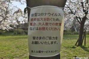 舎人公園の桜(足立区) 撮影:2020年3月24日